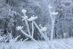 Winter / Hiver (tribsa2) Tags: nederlandvandaag marculescueugendreamsoflightportal bos forest foret winter hiver
