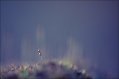 Believe me, I am Important (HikerandBiker) Tags: background bokeh focusstacking fokusstacking fotostack hintergrund ilca99m2 licht light macro makro moos outdoor sony sonya99ii sonyalpha99ii stack tamronsp90mmf28dimacro11usd unscharf unschärfe winter