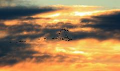 Love is in the air (vic_206) Tags: teruel gallocanta españa spain grullas amanecer nubes clouds corazón siluetas canoneos60d canon300f4liscanon14xii