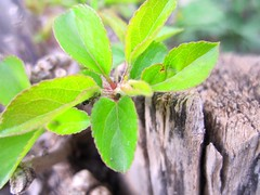 #flower #greenery #green #microphotography #contrast #branches #bark #leaves #nature #lovelynature (Soma Rostam) Tags: flower green nature leaves contrast branches bark greenery microphotography lovelynature