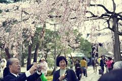 Japan Kyoto . . Skura in Daigo-ji   DSC_8020 (Ming - chun ( very busy )) Tags: travel flower tree japan lady cherry 50mm nikon women kyoto blossom   cherryblossom  sakura nikkor f18    d800  streetshot  50mmf18        traveljapan  f1850mm   streetsnap sukura