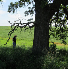 Teen with old oak (quirkyjazz) Tags: oaktree lonetree oldoak thattree plattevillewisconsin