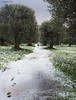 Snow and BestFriends (AzzuFio) Tags: snow winter landscape calabria