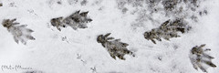 Chi arriva e chi parte [Explored] (_milo_) Tags: tracce neve snow angera porto italia italy canon eos 60d tamron 70300