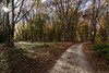 Follow your path (ambrasimonetti) Tags: path sentiero strada wood bosco forest foresta canfaito 2016 lastautumn canon leaves fogliesecche faggisecolari faggete natura saveearth