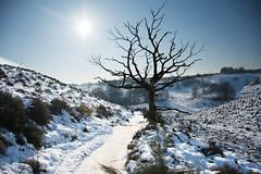 Winter (Ben Garssen) Tags: winter boom tree dead snow posbank pad sneeuw lucht blauw blue white pretty weather nikon sun sunshine gelderland rheden netherlands nederland holland d5200 nature natuur sky silhouette gras walk wonder hike wandelen route veluwe veluwezoom