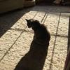 Soaking Up the Sun (jmhutnik) Tags: cat calico sunshine shadow sill silhouette carpet