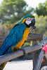 Parrot (KGR_) Tags: punta de namer cala millor mallorca d7100 holiday nikon 18105 papagei parrot