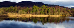 Loch o' the Lowes Dunkeld 29 Dec 2016 (JamesPDeans.co.uk) Tags: perthshire landscape plants gb reflection lochothelowes lightshade unitedkingdom scotland britain hills trees panorama dunkeld nature swt europe uk photography digitaldownloadsforlicence jamespdeansphotography printsforsale forthemanwhohaseverything view greatbritain prints for sale digital downloads licence man who has everything wwwjamespdeanscouk landscapeforwalls james p deans