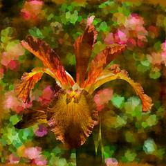 Firery Iris_Painted (ladyinpurple) Tags: pspxi photofiltre redfield finetouch iris leewalker descanogardens
