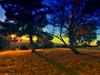 park_0983 (EYEsnap_Photography) Tags: vista park scenic sunset livermore tree