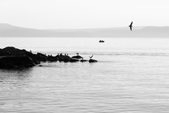 Free? (Anthony P26) Tags: animalsbirdsinsects birds category erdek places seascape travel turkey wildlife seabird seagulls birdinflight takeoff travelphotography seaside seashore coast coastal coastline canon70d canon canon1585mm misty sky silhouette headland scenery freedom serene peace silence sea water ripples waves outside haze highkey rocks flight monochrome blackandwhite whiteandblack bw outdoor
