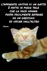 https://www.facebook.com/MossoTiziana/ #gatti #gatti #link #aforisma #MossoTiziana (tizianamosso) Tags: link mossotiziana aforisma gatti
