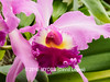 Duke Farms orchids-4142061-2 (myobb (David Lopes)) Tags: dukefarms hillsborough nj newjersey flower nature orchids olympus em1 omd