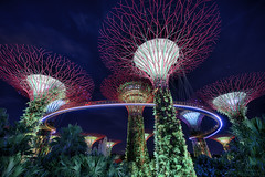Supertree Grove & Skywalk (mikemikecat) Tags: supertree grove gardens by bay skywalk indochine 濱海灣花園 sonya7r a7r mikemikecat sony building colorful blue 建築 建築物 建築結構 基礎建設 城市 夜景 nightscape urban 戶外 建築大樓 cityscapes carlzeiss twilight hdr