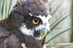 (60) Liberty's Owl Raptor & Reptile Centre