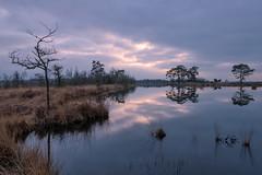 Spiegelglad (Pieter ( PPoot )) Tags: npdwingelderveld holtveen windstil reflectie spiegelglad zonsondergang