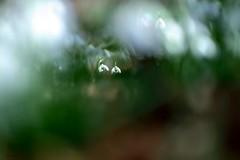 Duo (jpto_55) Tags: perceneige fleur bokeh xe1 fuji fujifilm omlens om85mmf2 hautegaronne france
