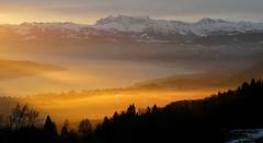 Light garden (Alpine Light & Structure) Tags: switzerland schweiz suisse zurich uetliberg sunrise
