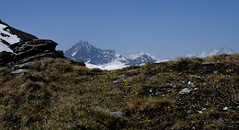 Emilius, Gran Paradiso and Grivola from Grand Pays summit, St Bartelemy, Aosta valley (gianlucaargano) Tags: granparadiso grivola emilius stbartelemy grandpays