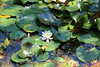 IMG_4555 (cheryl's pix) Tags: california berkeley botanicgarden botanicalgardens botanicalgarden botanicgardens berkeleyca berkeleybotanicalgarden ucbotanicalgarden universityofcaliforniabotanicalgarden universityofcaliforniabotanicalgardenatberkeley