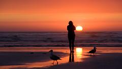 Sunset (Alex Butterfield) Tags: ocean sunset seagulls reflection beach silhouette oregon seaside or oregoncoast wetsand seasideor pentaxk3ii