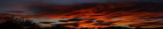 Sunrise 11 16 16 #27 Panorama 3 (Az Skies Photography) Tags: sun rise sunrise morning dawn daybreak sky skyline skyscape clouds cloud red orange yellow gold golden salmon black canon eos rebel t2i canoneosrebelt2i eosrebelt2i rio rico arizona az riorico rioricoaz arizonasky arizonaskyline arizonaskyscape arizonasunrise november 16 2016 november162016 111616 11162016