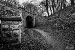 Anston Stones - Railway Bridge (Steve Whitham - BGphotography) Tags: anstonstones bridge railway woods trees path woodland worksop northanston blackandwhite mono stone wall
