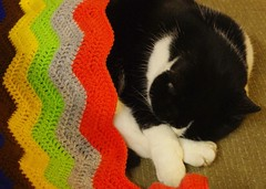 Rosie relaxes    366/366 (horsesqueezing) Tags: 366the2016edition 3662016 day366366 31dec16 cat rosie blanket crocheted