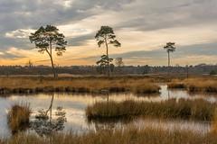 Fen landscape (stevefge) Tags: hatertsevennen landscape trees water sky reflectyourworld reflections fens reed winter nederland netherlands nederlandvandaag gelderland