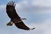 Impressive Flyover (TroyMarcyPhotography.com) Tags: 11windchill americanbaldeagle canon400mmf56l canon7d illinois iowa mississippiriverbaldeagles2017 winter birds cold nature wildlife wwwtroymarcyphotographycom