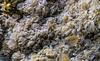Meeres Federn (ruedigerhey) Tags: meeres fehmarn aquarium naturnaturpur naturephotography koralle wasser federn macro wind meer muscheln algen natur ostsee deutschland ostseebad ostholstein norddeutschland scharbeutz schleswigholstein himmel wolken