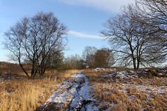 _IMG_5800 (Ernst-Jan de Vries) Tags: hoogveen nature natuur winter snow winterscape outdore peat bog moor veen tree track heide erica heath klazienaveennoord bargercompascuum drenthe netherlands