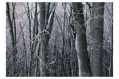 Hermit forest. (Gianluca Perseu) Tags: winter forest wood tree trees nature intothewild intothenature hermit