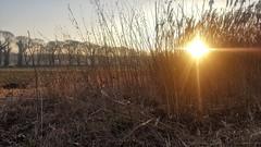 Geblendet (pattaoverhage) Tags: düsseldorf grafenbergerwald wald niederrhein nrw winter sunny sunset gras mobile samsung outdoor landschaft landsacape