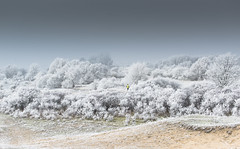 Winter-wonder-land (fransvansteijn) Tags: rood