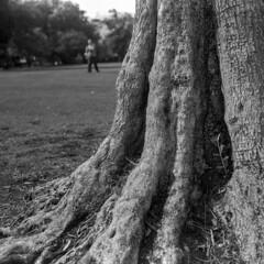 Figure in the Park (Blurmageddon) Tags: mamiyasixautomat 120folder 120film film analogphotography rollei ortho25 blackandwhite epsonv700 mediumformat filmdev:recipe=10627 film:brand=rollei film:name=rollei ortho 25 film:iso=25