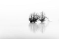 Het zwarte (en witte) schaar (Sander Grefte) Tags: zwartwit blackandwhite tree trees boom bomen minimalistisch landscape landschap misty mist mistig sandergreftephotoscom nikon tokina1228mm