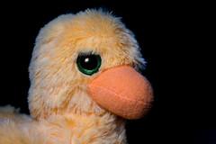 Beautiful Eyes (Graham'M) Tags: flickrfriday beautifuleyes eyes duck toy fluffy indoors closeup blackbackground cuddly