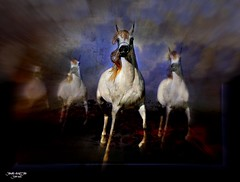 SERENADE (jawadn_99) Tags: blue red horses horse favorite white black art animal poster photography fantastic flickr gulf vivid scout explore arab kuwait arabian photoart raising galope vividimagination supershot stalion 40faves coth5 horses22 interrestigness enteredinsyb
