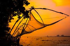 Chinese fishing net in Kochi, Kerala (marcusfornell) Tags: travel sunset india fish net nature beauty evening fishing fisherman asia asien roadtrip kerala fishmarket cochi cochin indien kochi southindia kochin southasia godsowncountry chinesefishingnet sdindien sdasien chinesefishernet kochifort
