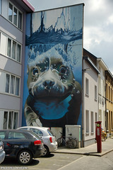 Mechelen muurt (Red Cathedral [FB theRealRedCathedral ]) Tags: dog streetart art swim graffiti mural underwater mechelen redcathedral muralism aztektv smates bartsmeets mechelenmuurt onderwaterhond
