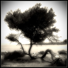 """Face  la mer"" - ""In front of the sea "" (Corinne DEFER - DoubleCo) Tags: travel sea blackandwhite bw mer france tree art blancoynegro nature square landscapes noiretblanc nb squareformat paysage crpuscule arbre paesaggi paysages contrejour paisagens landschaften carr defer  spiritofphotography carrfranais corinnedefer updatecollection squarepoetry"