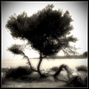 """Face à la mer"" - ""In front of the sea "" (Corinne DEFER - DoubleCo) Tags: travel sea blackandwhite bw mer france tree art blancoynegro nature square landscapes noiretblanc nb squareformat paysage crépuscule arbre paesaggi paysages contrejour paisagens landschaften carré defer 法国 spiritofphotography carréfrançais corinnedefer updatecollection squarepoetry"