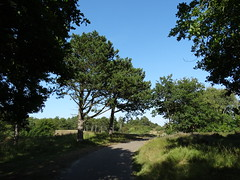 Trees, Nature, Landscape, (Rahmi Asiruh) Tags: wood trees wild summer sky naturaleza plant color tree love nature colors beautiful forest landscape spring bomen woods cloudy sweet outdoor dunes sony awesome natur natuur cybershot bluesky paisaje best rbol lonely viewpoint landschaft baum sandhill paesaggio aa orman salvaje doa peyzaj dunen thebestpicturegallery dschx300