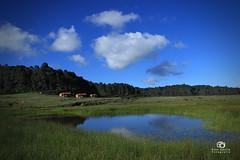 Llano de las flores, Oaxaca (Kios Photography) Tags: naturaleza nature oaxaca sierrajuarez fotografo ecoturismo sierranorte ixtlan ixtlandejuarez ecoturixtlan kiosgarcia kiosphotography