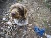 Food? (Fra_mico) Tags: dog mina breed drathaar lagotto romagnolo mountains trail animals cane occhio eye