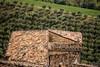 Rooftop in Civitella del Tronto (Maarten Takens) Tags: civitelladeltronto abruzzo italia italie rooftop strucure green old mood