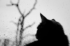 Dora and Dead Tree (Kozmic Hammer) Tags: cat tree rain nikkor dslr digitalslr nikon d7100 nikond7100 lens nikonf fmount 24megapixels 241megapixels 24 241 nikonbody digitalslrcamera dslrcamera cmos cropsensor crop 241mp 24mp nikondx dx waterdrops droplets drops water