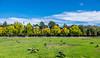 Vasona Lake County Park (randyherring) Tags: ca california santaclaracountyparks canadagoose vasonalakecountypark nature losgatos afternoon goose park lake recreational outdoor brantacanadensis unitedstates us